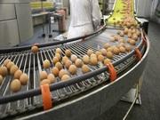 Industrial Food processing lines,  by KERONE